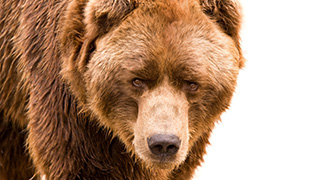 Bear Awareness Online Safety Training Courses